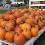 Orange City's 'Pumpkinland' owner says 2018 crop 'really good'