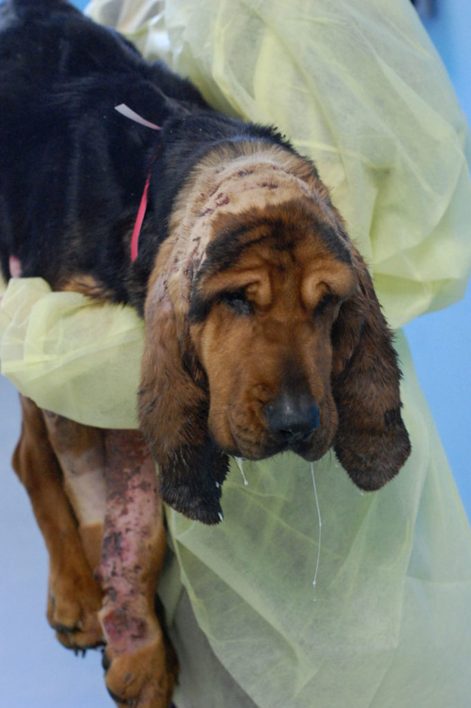 Warren County Woman Charged With Animal Torture For