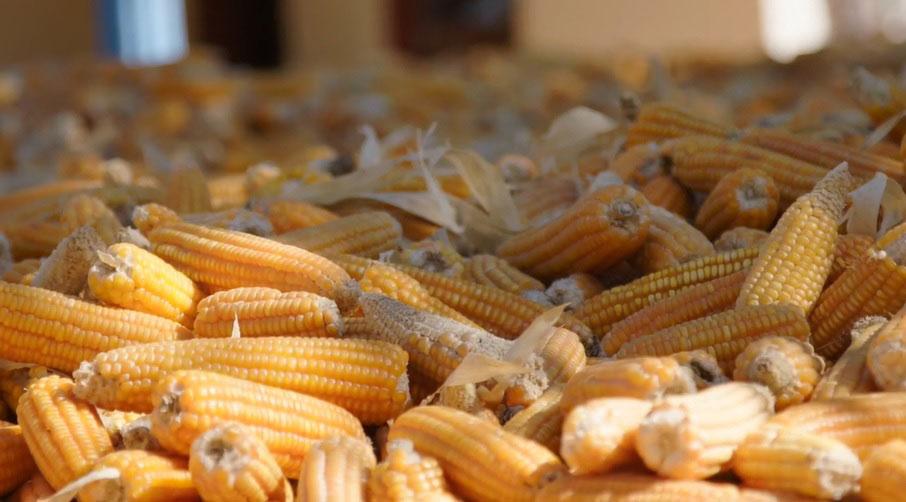 ISU documentary on the beauty of seeds wins award - Radio Iowa